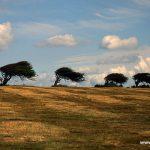 England; Eastbourne; Südküste; Vereinigtes Königreich, Großbritannien Steilküste, Bäume, Wind, Wuchs, wachsen, Wetter, Wolken, blau, weiß