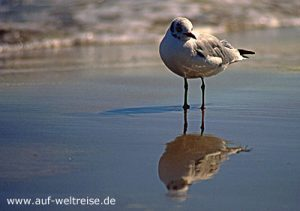 Meer, Ostsee, Möwe, Watt, Spiegelbild, Abbild, Tier, Vogel, stehen