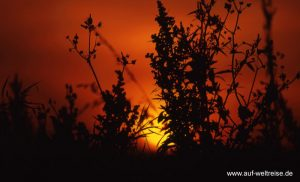 Irland, Sonnenuntergang, Sonnenaufgang, Sonne, rot, Untergang, Aufgang, Strauch, Sträucher, Äste, Ast, Astwerk, gelb