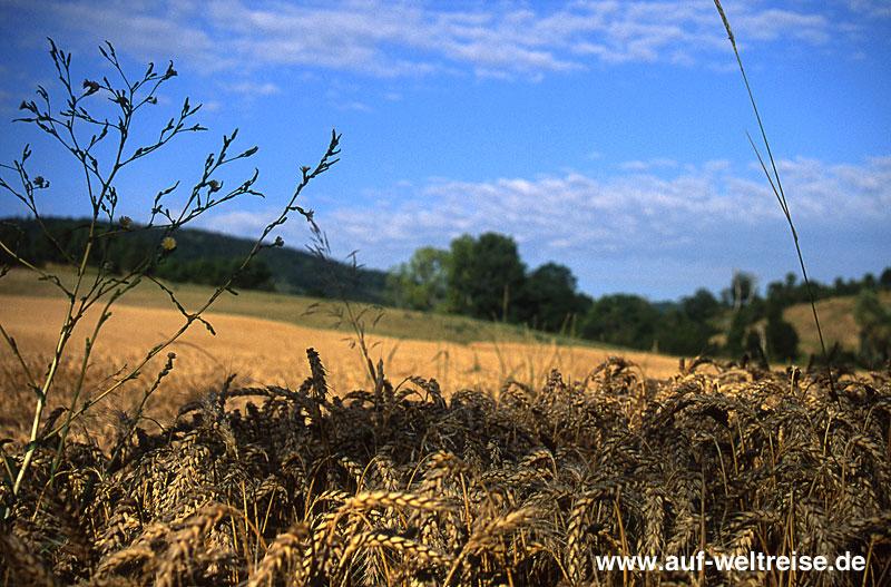 Frankreich, Getreide, Feld, Himmel, blau, Sonne, Licht, Bäume, Landschaft, Natur